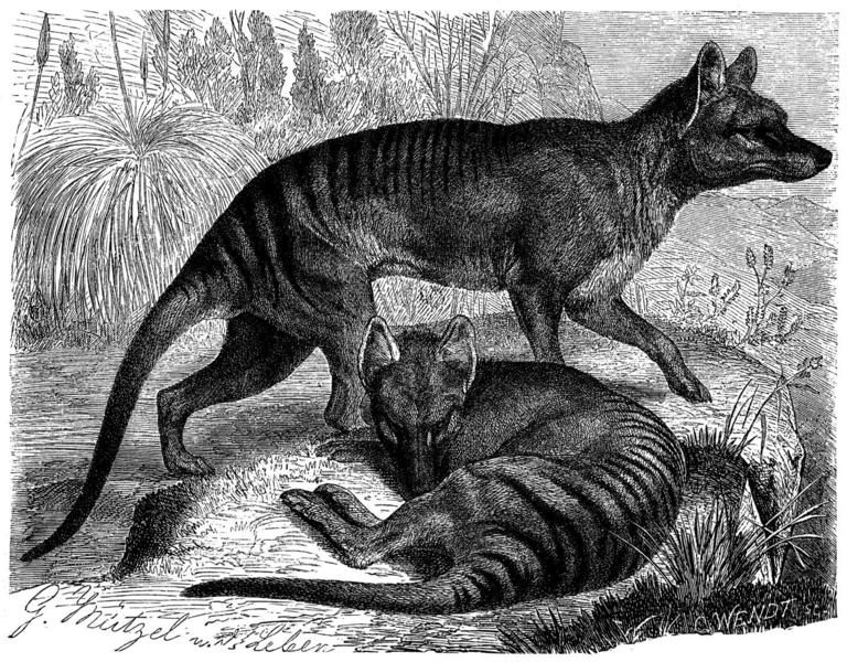 Beutelwolf - erschienen in Brehms Tierleben
