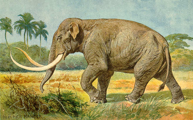 Mammuthus (Heinrich Harder)