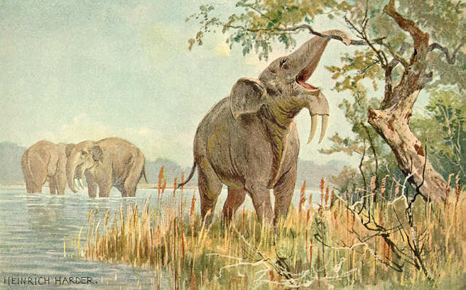 Deinotherium (Heinrich Harder)