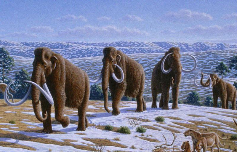 Mammuthus (Heinrich Harder)