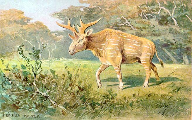 Sivatherium (Heinrich Harder)