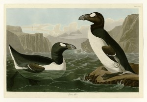 Riesenalk (John James Audubon)
