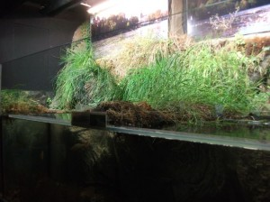 Aquarium (Tiergarten Ulm)