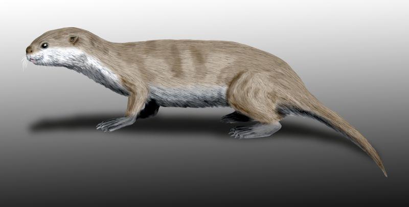 Puijila darwini, ein früher Vorfahr der Robben (© N. Tamura)