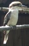 Jägerliest (Vogelpark Irgenöd)