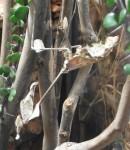 Wandelnde Geige (Tierpark Hellabrunn)
