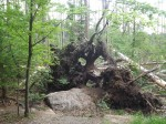 Der Bayerische Wald (Ausschnitt)