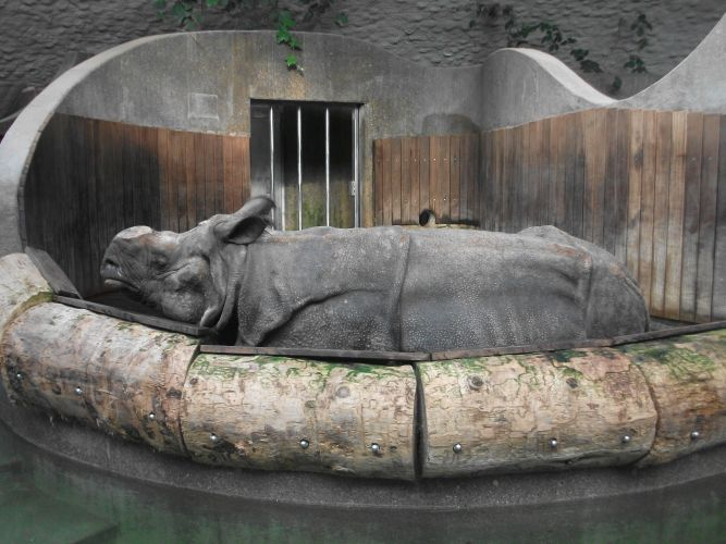 Panzernashorn (Tierpark Hellabrunn)