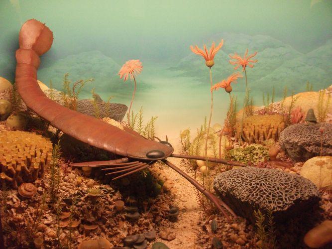 Seeskorpion und Seelilien (Mensch und Natur)