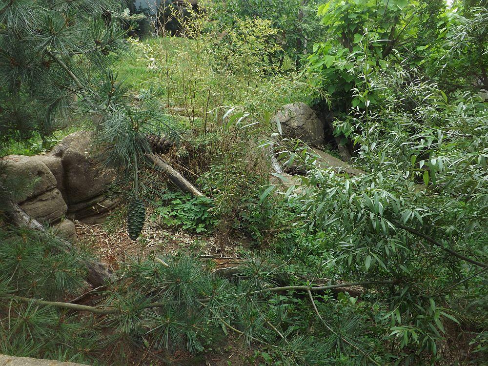 Tigergehege (Zoo Brno)