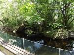 Begehbare Auenwald-Voliere