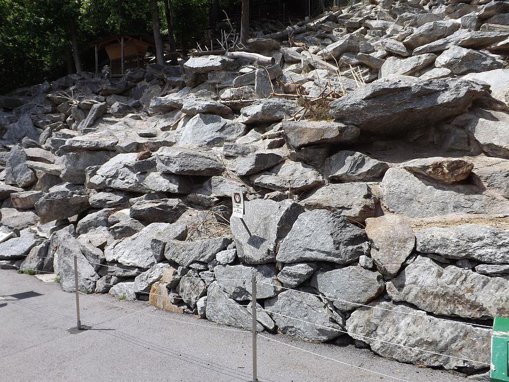 Begehbares Steinbockgehege