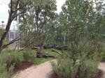 Lemurenwald von innen