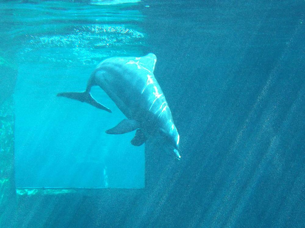 Delfin im blauen Salon (Tiergarten Nürnberg)