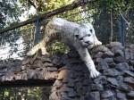 Schneeleopardgehege - Außenanasicht (Zoo Magdeburg)