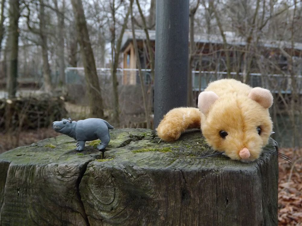 Leblose Tiere (Tierpark Hellabrunn)