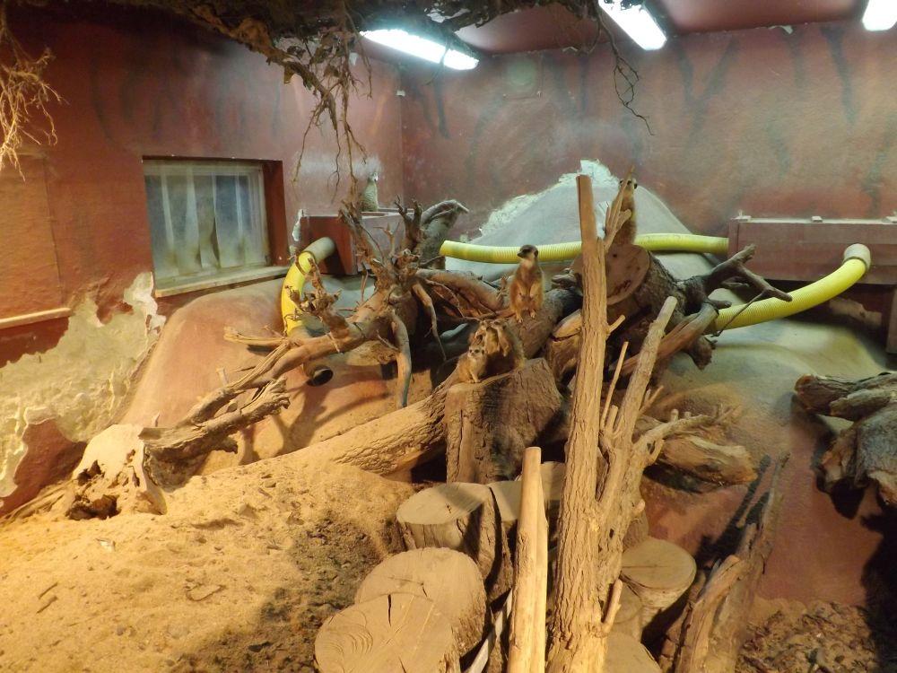 Innengehege der Erdmännchen (Zoologischer Harten Hof)