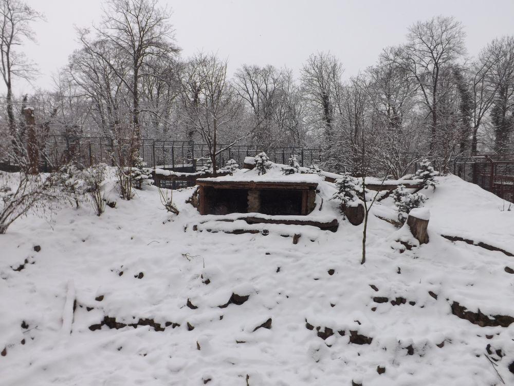 Tigeranlage (Zoo Aschersleben)