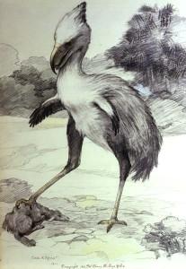 Phorusrhacos longissimus (Charles R. Knight)