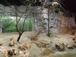 Fledermausgrotte, Webervögel und Unzertrennliche (Tierpark Hellabrunn)