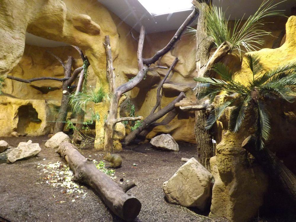 Fledermausgrotte, Gehege für Agutis und Amazonen (Tierpark Hellabrunn)
