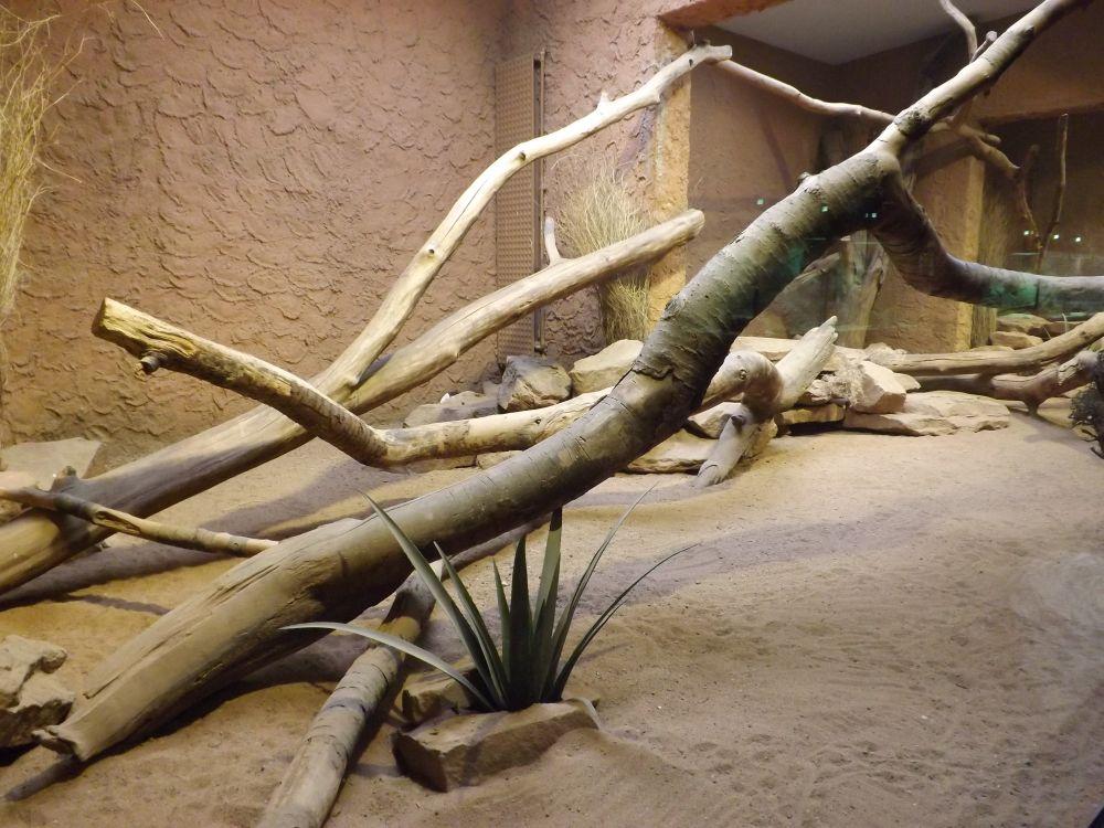 Fledermausgrotte, Gehege der Zebramangusten (Tierpark Hellabrunn)