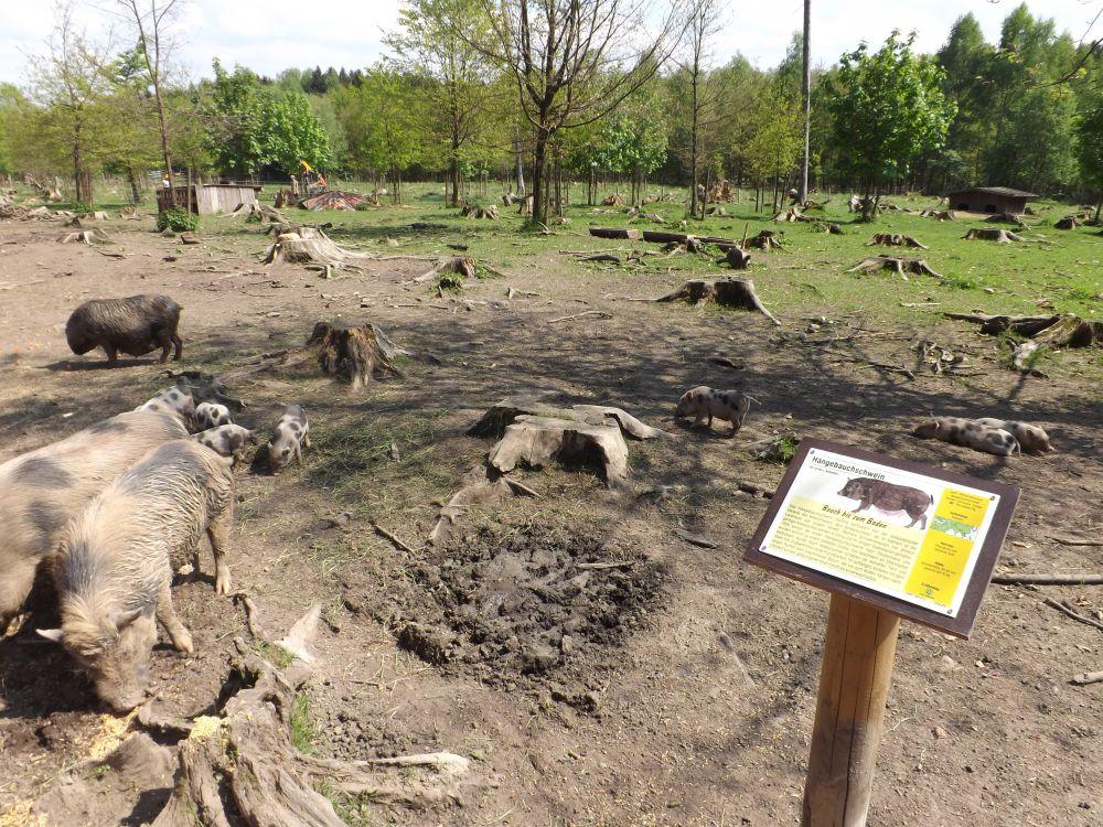 Hängebauchschweinanlage (Wildpark Poing)