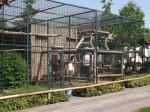 Greifvögel und Affen (Zoo Chleby)