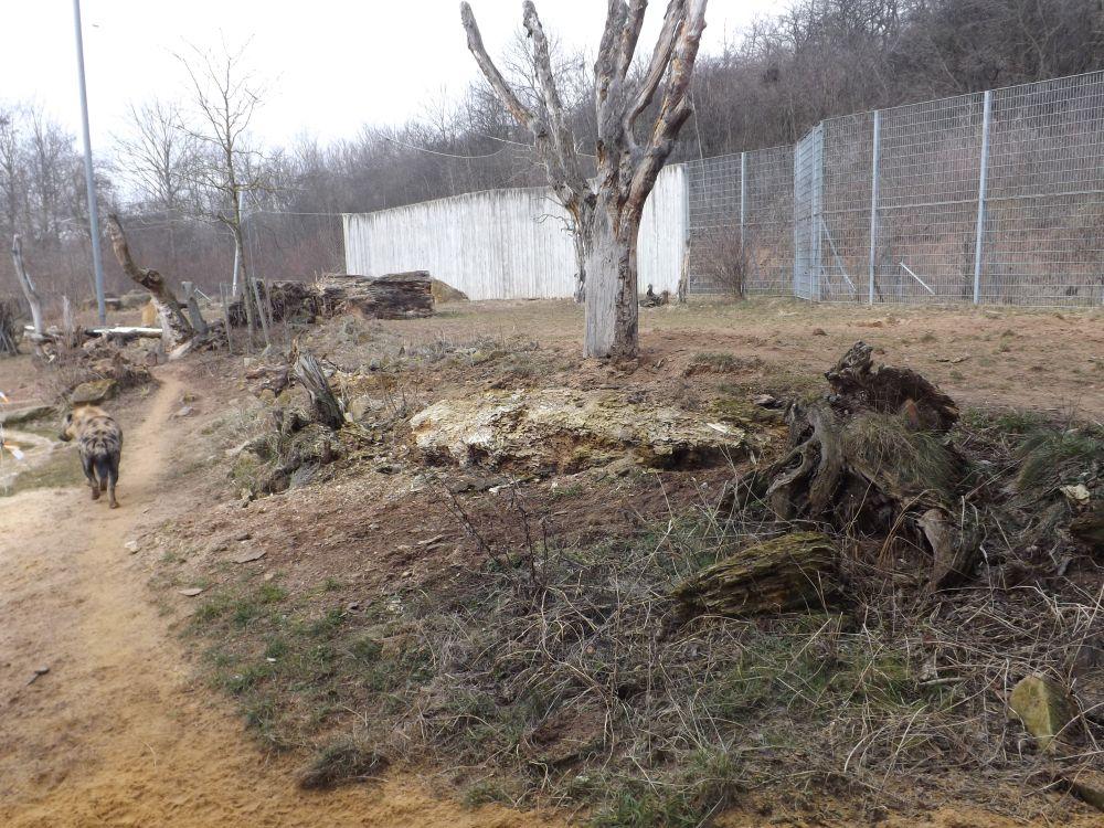 Außenanlage der Hyänen (Thüringer Zoopark)