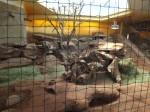 Innenanlage der Klippschliefer (Thüringer Zoopark)
