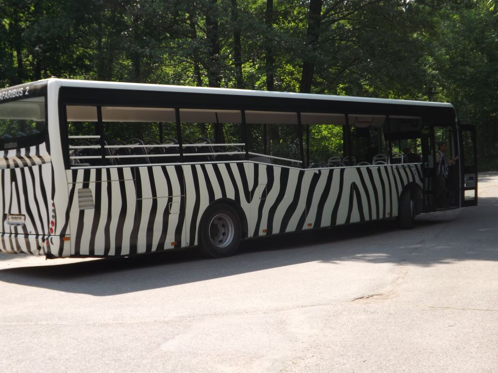 Safaribus (Zoo Dvur Kralove)