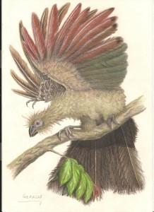 Hoazinavis  lacustris