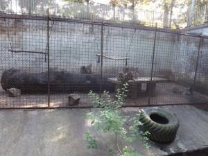 Ehemaliges Bärengehege (Zoo Olomouc)