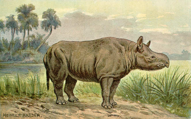 Aceratherium (Heinrich Harder)