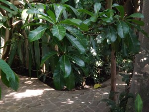 Tropenhaus (Zoo Zlin)