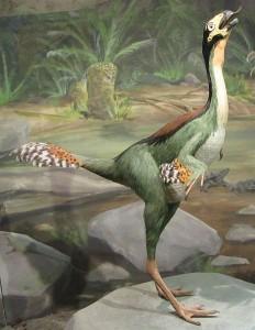 Caudipteryx (© Christophe Hendrickx)