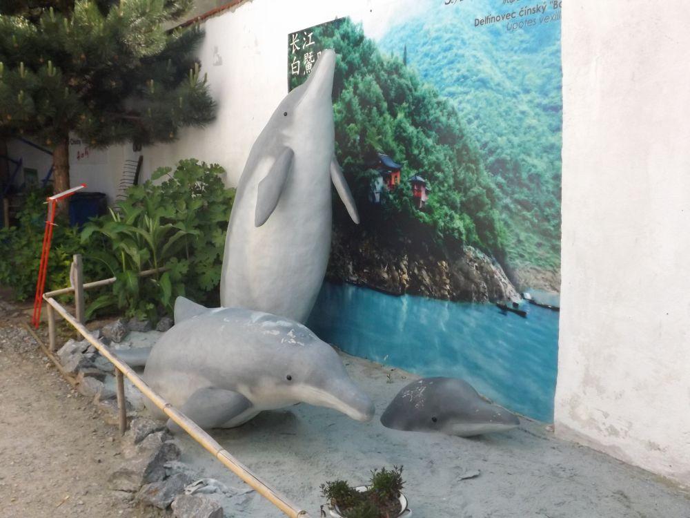 Chinesischer Flussdelfin (Zoo Chleby)