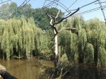 Reihervoliere (Zoopark Chomutov)