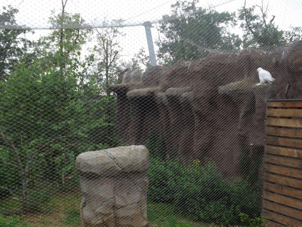 Schneeeulenanlage (Zoo Brno)