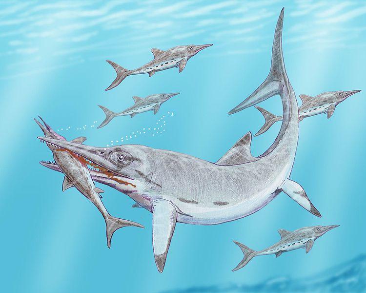 Temnodontosaurus burgundiae frisst Stenopterygius hauffianus (Dmitry Bogdanov)