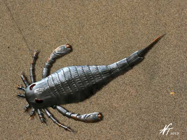 Eurypterus tetragonophthalmus (© N. Tamura)