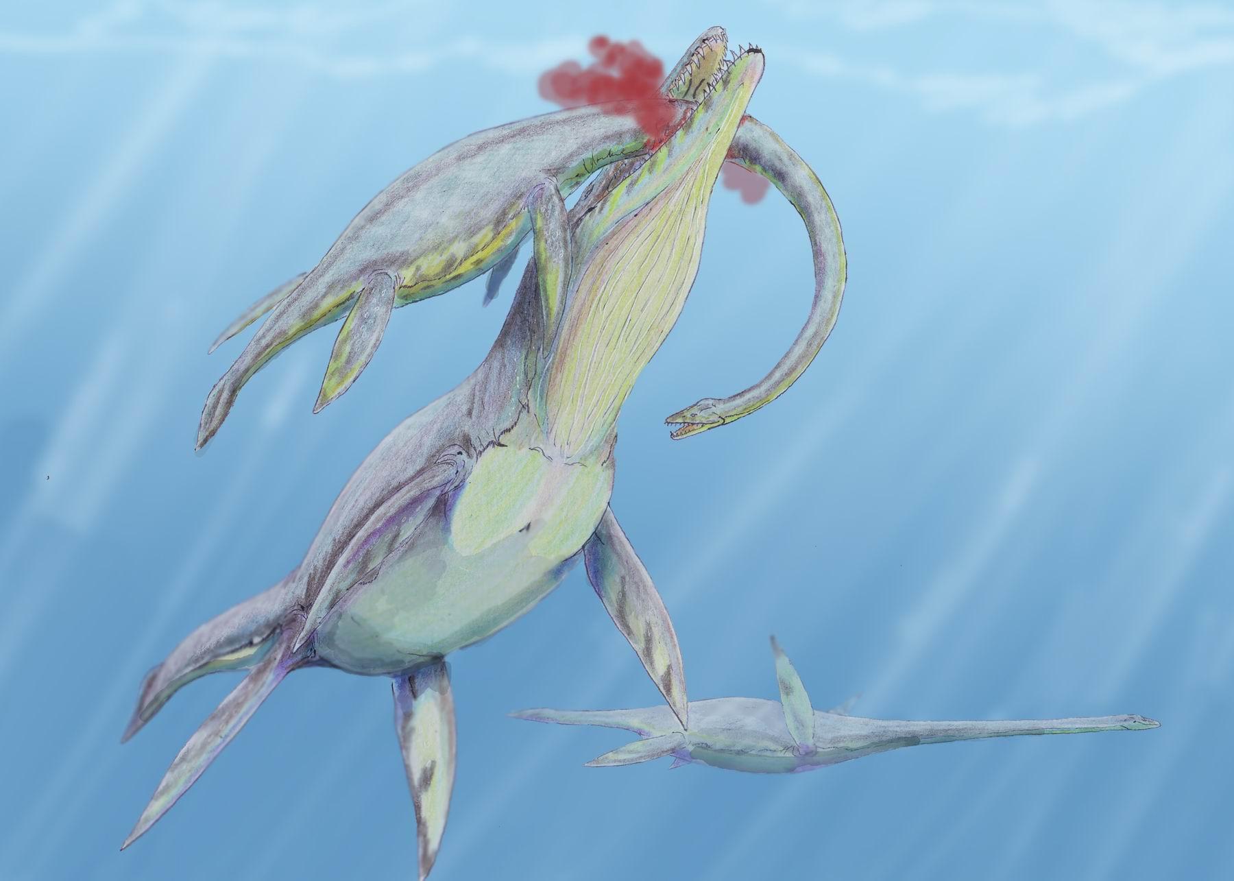 Kronosaurus bei der Jagd auf den Plesiosaurier Woolungasaurus (Dmitry Bogdanov)