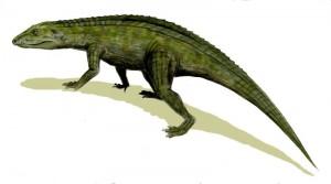 Protosuchus richardsoni (© N. Tamura)