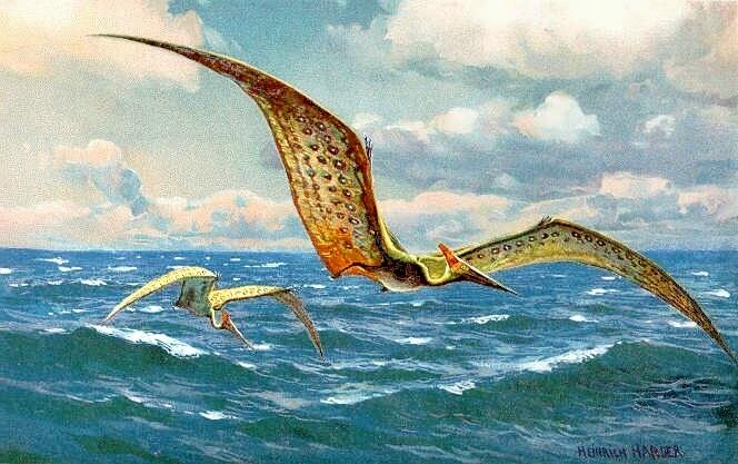 Pteranodon (Heinrich Harder)