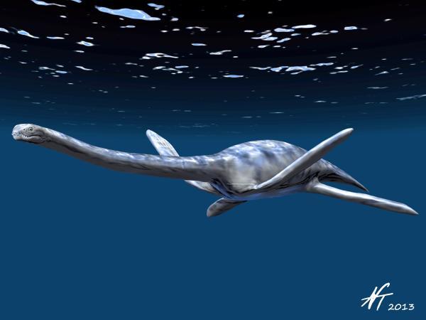 Zarafasaura oceanis (© N. Tamura)