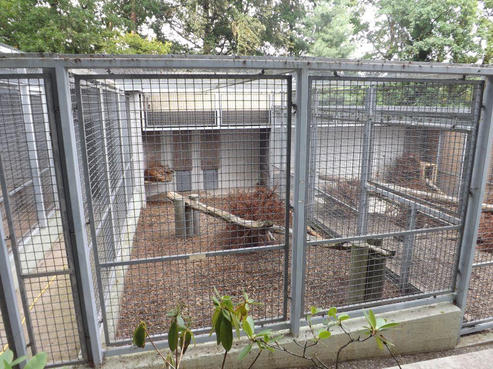 Pumas (Raubtierasyl Ansbach)