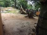 Erdmännchenanlage (Tiergarten Nürnberg)