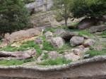 Gämsenanlage (Zoo Salzburg)