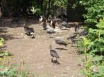 Vogelvoliere (Tierpark Hellabrunn)