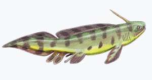Expleuracanthus gaudri (Dmitry Bogdanov)